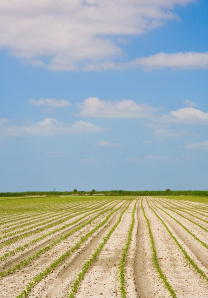 Cultivated field